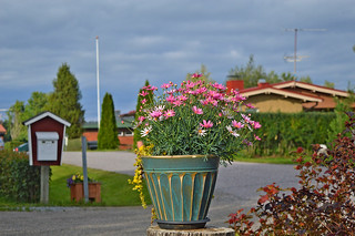 Summertime 🌷🌷🌷 and nothing more... #Summer #Finland