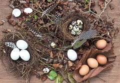 Nesting time (Chandana Witharanage) Tags: srilanka southasia 7dwf crazytuesdaytheme eggsactly speckledeggs browneggs quaileggs whiteeggs feathers dryleaves tabletop creativephotography canoneos7d chandanawitharanagephotography ef40mmf28stm pancakelens lifeisarainbowoneyearincolours brown 4552weeks