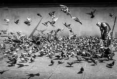 Feed the birds (jacque.j) Tags: pigeons birds france paris pompidou francais birdfeed flying oldman wings