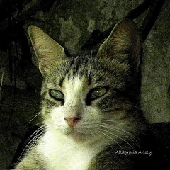 Retrato/Portrait (Altagracia Aristy Sánchez) Tags: gato cat retrato portrait laromana quisqueya repúblicadominicana dominicanrepublic caribe caribbean antillas antilles trópico américa altagraciaaristy fujifilmfinepixhs10 fujifinepixhs10 fujihs10 mascota pet