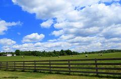Happy Fence Friday! (Lois McNaught) Tags: happyfencefriday scene landscape farm country nature baledhay fence sky clouds barn silo rural rustic flamborough hamilton ontario canada