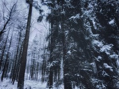 Winter forest (Mihaela_gor) Tags: winter snow forest trees woodland woods nature landscape outdoors scenery germany deutschland cold weather frozen vinter schnee wonderland