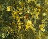 Granite 20x 00004 (rcblackmi) Tags: rock mineral macro zerene photomicrograph granite