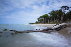 deadwood ([-ChristiaN-]) Tags: deadwoow wood beach nature long exposure le lzb langzeitbelichtung strand dars germany deutschland holz totholz windflüchter fischlanddars zingst slow time water sky blue white summer sea trees