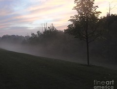 Rainbow clouds on a foggy morning (Aliceheartphoto) Tags: fog sony cybershot cincinnatiphotography cincinnati ohio trees naturephotography nature sunrise pinkclouds grass morning