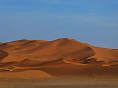 P1110828d18u Sahara - Erg Chebbi (wdeck) Tags: tz91 lumixdctz91 panasoniclumixdctz91 erfoud marocco marokko sand düne dune red ergchebbi
