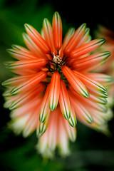 Downtown (ranzino) Tags: kennettsquare longwoodgardens pa pennsylvania flower