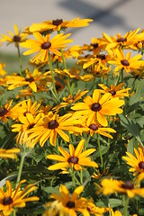 IMG_7912 (giddyup2002) Tags: grantsviewcommunitygarden grantsviewgarden communitygarden garden stlouis