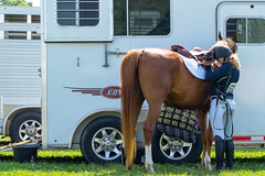 Preparation (HelwigPhotos) Tags: horse riding jump jumping woman happy sunny sports equestrian fence chestnut arabian tree pennsylvania barrel show champion action trailer travel shiny clean wash