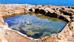 Table Rocks pool (Mr Ian Lamb 2) Tags: swimmingpool pool tidal tablerocks brownsbay whitleybay bathingpool coast tidalpool