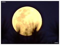 Lua / Moon (Ju Emery) Tags: juemery lua moon luna moonlovers luacheia lunallena fullmoon boanoite goodnight yellowmoon luaamarela brasil brazil bsb brasilia