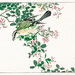 Bull-headed Shrike and Bush Clover illustration from Pictorial Monograph of Birds (1885) by Numata Kashu (1838-1901). Digitally enhanced from our own original edition.