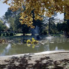 William Land Park Fountain (Scott Micciche) Tags: hasselblad mediumformat sixbysix kodak portra 400