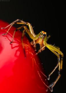 Unknown Spider...