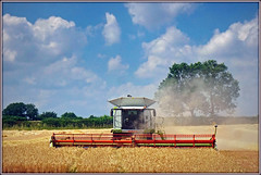 Harvest time. (Jason 87030) Tags: wheat crop wind weather sky crops harvest combineharvester claas machinery farm fields local countryside uk england greatbritain cut blades