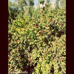 Juhuuu meine lieben 😊 Grün die Farbe der Hoffnung, der Beständigkeit, steht für Durchsetzungsvermögen und Entspannung. Je mehr Menschen sich in der Natur aufhalten, desto besser wurde Haltung, Wohlbefinden und man ist Stress resistenzer. Fand die Fa (cosimabella) Tags: handsome germany smile beautiful amazing cosima me shoot hohewart day boatlife instagood art recklinghausen nature like cosimabella picture lifestyle flower outdoor picoftheday awesome elementaria empathin photography fun ts fashion