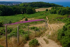 Cromer (A Picture Of Norfolk) Tags: cromer norfolk summer coast path cliffs hill trees countryside landscape town
