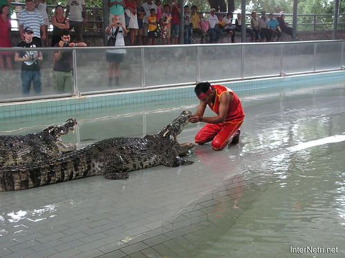 В пащу крокодилу Паттайя Таїланд Thailand InterNetri 44