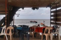 (fabhuleux) Tags: 6d canon france antilles martinique street nature bird restaurant sea sun beach