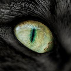 Cateye (Bauer Florian) Tags: cateye fe 90mm f28 macro g oss makro cat eye sony ilce7rm2 tier animal blick portrait