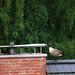 Spaziergang auf dem Dach (15)