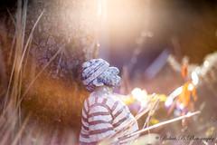 Der Mann der in die Ferne schaut. (Robert.B. Photography) Tags: seemann baum garten natur gartenfigur sonne licht gegenlicht sonnenlicht pflanzen baumstamm seaman tree garden nature gardenfigure sun light backlit sunlight plants treetrunk