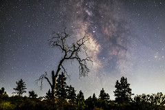 Milky Way Behind an Oak Tree And Above Some Pine Trees (slworking2) Tags: julian california unitedstates us milkyway clevelandnationalforest mountlaguna pines oak dead tree deadtree forest silhouette galaxy night sky