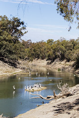Darling River at Wier 32 (oz_lightning) Tags: australia birds canon6d canonef100400mmf4556lisiiusm menindeelakes nsw westerndivision wier32 geography landscape nature pelican river water wildlife menindee newsouthwales aus