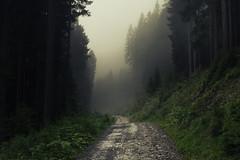 Mist in the Alps (Netsrak) Tags: kleinwalsertal wald nebel weg alpen