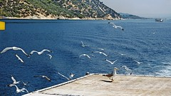 Greece, Macedonia, Aegean Sea, seagulls on the boat cruising around Mount Athos peninsula (Macedonia Travel & News) Tags: greecemacedonia agiooros cruise chalkidiki aegeansea macedoniatravel greece makedonia macedoniatimeless macedonian macédoine mazedonien μακεδονια ancient greek culture vergina sun blog star thessaloniki hellenic republic prilep tetovo bitola kumanovo veles gostivar strumica stip struga negotino kavadarsi gevgelija skopje debar matka ohrid mavrovo heraclea lyncestis history alexander great philip macedon nato eu fifa uefa un fiba macedonianstar verginasun macedoniapeople macedonians peopleofmacedonia macedonianpeople macedoniablog macedoniagreece timeless македонија macedonianews macedoniapress македонијамакедонскимакедонци tourisminmacedonia