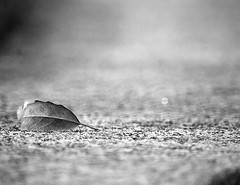 A Nikon in Ireland (DigitalTreeHouseArts) Tags: castle ireland irish irishcross irishmemorial blackandwhite mountains mountain valley duck bees bee christ galway countygalway kilmainhamgaol kilmainham dublin glendalough solotravel travel vacation contrast