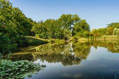 Small pond in the Danube-Auen National Park (a7m2) Tags: nationalpark danubeauen pond teich danube schwechat vogelschutzgebiet lobau hainburg forest fauna flora reflektion river island water reflections sky trees serene