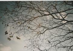 017.jpg (Tai Moura) Tags: kodak film filme 35mm proimage 100 trip100r olympus bird passaro tree olympustrip100r lomo lomography lomografia