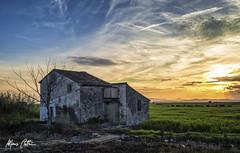 La casa de la marjal (Alfonso Beltran) Tags: sunset atardecer albufera valenciaspain arroz rice