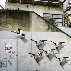 #spreadyourwings every day / #art by #OakOak (and a pasteup by #blockheadhipsterskulls). . #brussels #Belgium #streetart #graffiti #urbanart #graffitiart #streetartbelgium #graffitibelgium #visitbrussels #urbanart_daily #graffitiart_daily #streetarteveryw (Ferdinand 'Ferre' Feys) Tags: instagram gent ghent gand belgium belgique belgië streetart artdelarue graffitiart graffiti graff urbanart urbanarte arteurbano ferdinandfeys oakoak