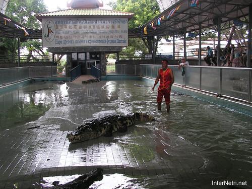 В пащу крокодилу Паттайя Таїланд Thailand InterNetri 07