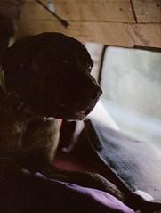 Benji (Lauren Fritts) Tags: campervan camper van trailer trailerpark mobilehome trailerparkseries dogs sunrise bokeh film 35mm nikonfm2 nikon fm2 kodak ektar100 ektar untouched untouchedfilm c41 thumbprints mastif pitbull beach assateagueisland trip roadtrip students highschool artteacher grunge grungephotography primelens education lauren fritts laurenfrittsart laurenfrittsartist