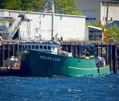 Packer Polar Lady (chartan) Tags: workingboats fishing tender ketchikan alaska