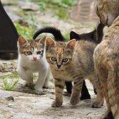 P5191597 24x24 (M64RM) Tags: cat
