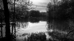 The Pond 8 (Jeffery Womack) Tags: mayburystatepark blackandwhite forest lake michiganstatepark monochrome water
