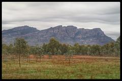 Whats For Breakfast Skippy? (florahaggis) Tags: wartook victoria australia grampiansnationalpark bush kangaroos wildlife nature winter canon6dmkii