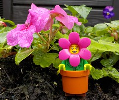 We flower love the rain! (Lego Custom Zone) Tags: lego minifigs minifigure toy toys flower pot water rain eco green plants friendly garden soil