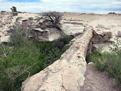 pfpd054bridge (invisiblecompany) Tags: 2018 travel usa nationalpark arizona petrifiedforest