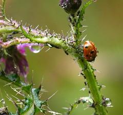 Photo of Ladybird in the Rain !