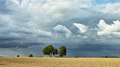 A Charlton Clump With a Shower Behind (stevedewey2000) Tags: wiltshire salisburyplain landscape treescape cloudscape skyscape clouds trees charltonclumps charlton copse tree 169 sigmadp2merrill