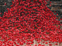 Poppy Display.