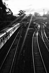 Silver lines (alideniese) Tags: 7dwf bw blackandwhite monochrome landscape traintracks trainlines station lines leadinglines shotfromabove evening sunlight sunset beams sunbeams light shadow alideniese hawksburnstation melbourne victoria australia buildings contrast lensbaby blur focus