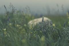 Silence (charhedman) Tags: watertonpark alberta flickrcation fieldofwildflowers rock aplacetorest flowers