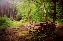 Deep into the woods (DrQ_Emilian) Tags: landscape view forest woods trees logs trunks nature outdoors light colors details sunlight sunshine green wanderlust travel explore discover schurwald stetten kernen remstal remsmurrkreis badenwürttemberg germany photography hobby