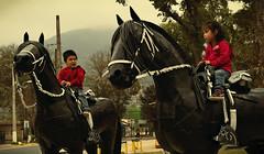 2 (jpi-linfatiko) Tags: niños children caballos horses esculturas sculpture olmue plaza nikon d3200 1855 filtro fliter olmué